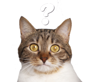 Un chat visiblement à l'ouest avec un point d'interrogation au dessus de sa tête